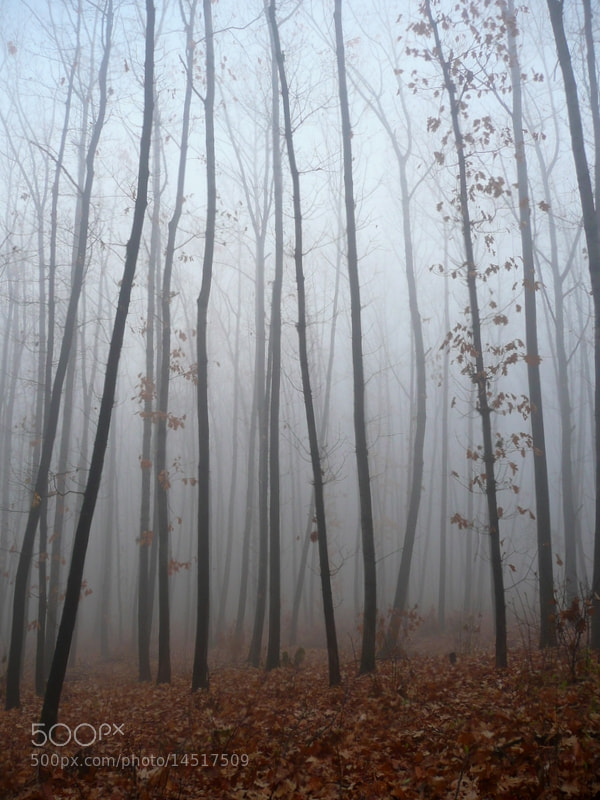 Photograph Autumn fog by Martin Zeinelov on 500px