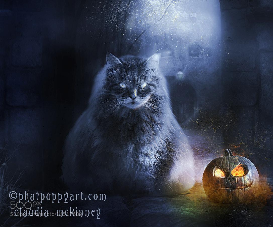 Photograph Pumpkin by Phatpuppy Art on 500px