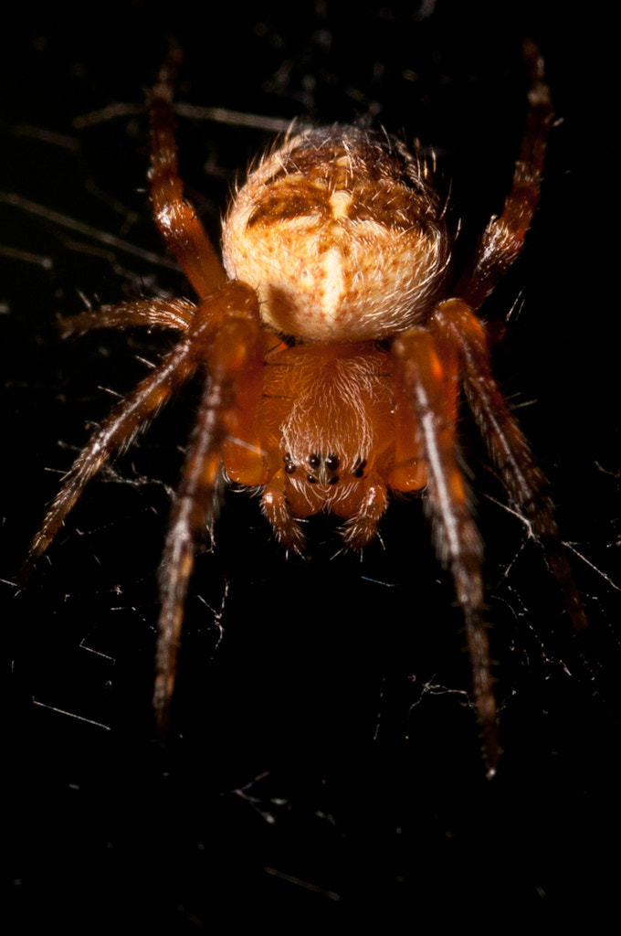 Photograph Spider by Dennis Rivera on 500px