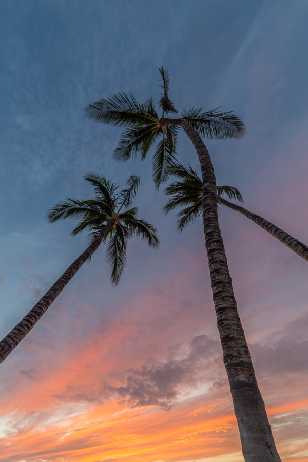 Palm Sunset by Joey Doll on 500px.com