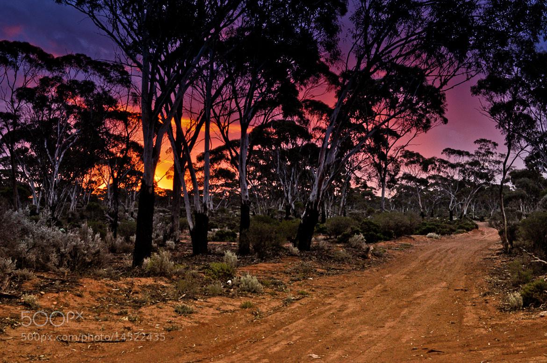 Photograph burning bush by Lory Noya on 500px