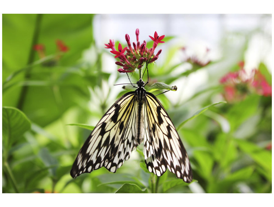 Photograph butterfly by Julia Lau on 500px