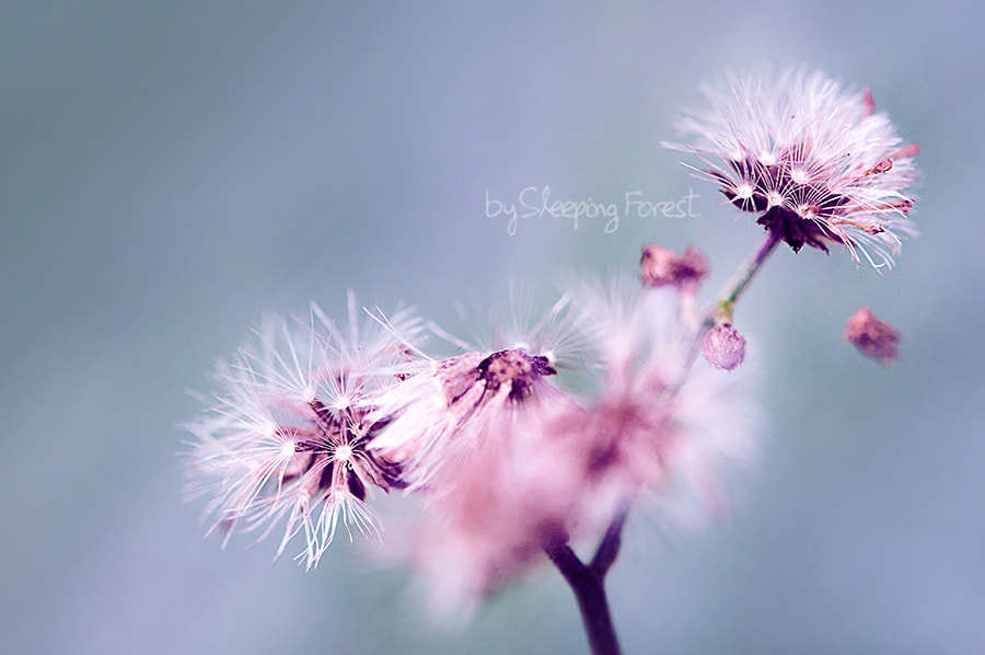 Photograph flower by Aronnsak Teelanuth on 500px