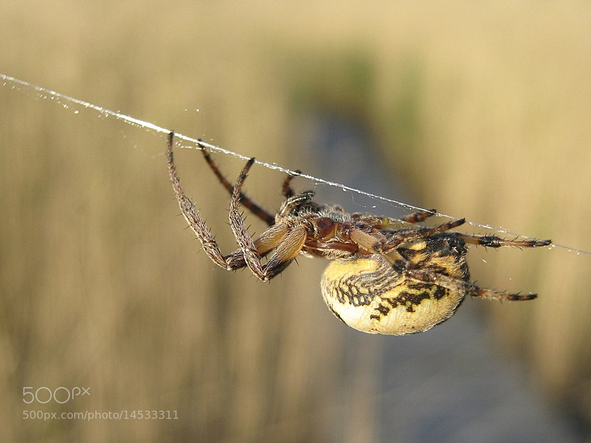 Photograph spider by Sandra Anohina on 500px