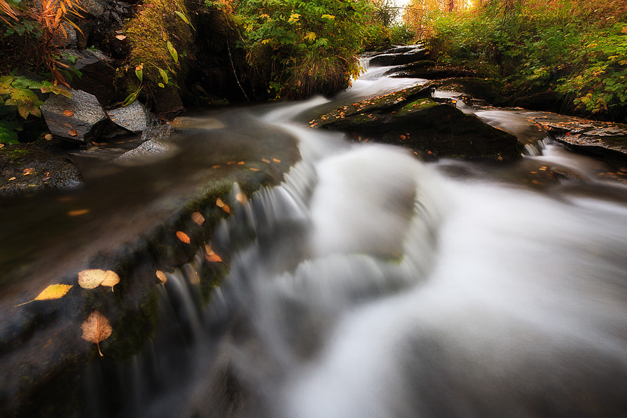 Photograph Fall in the Forest by Arild Heitmann on 500px