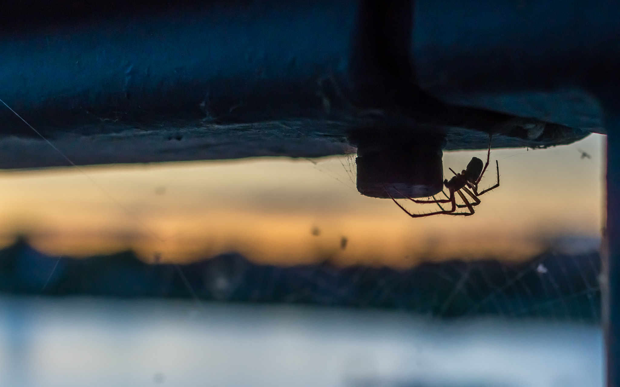 Photograph Lurking in the Dusk by Sabri R. on 500px