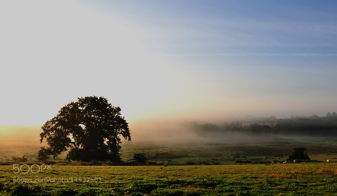 Photograph Misty Morning by Bjarne Klarskov on 500px