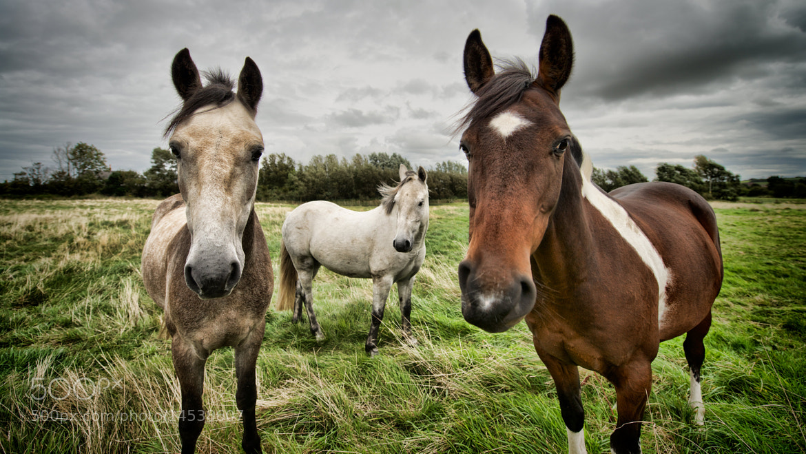 Photograph Three amigos by Owen G on 500px