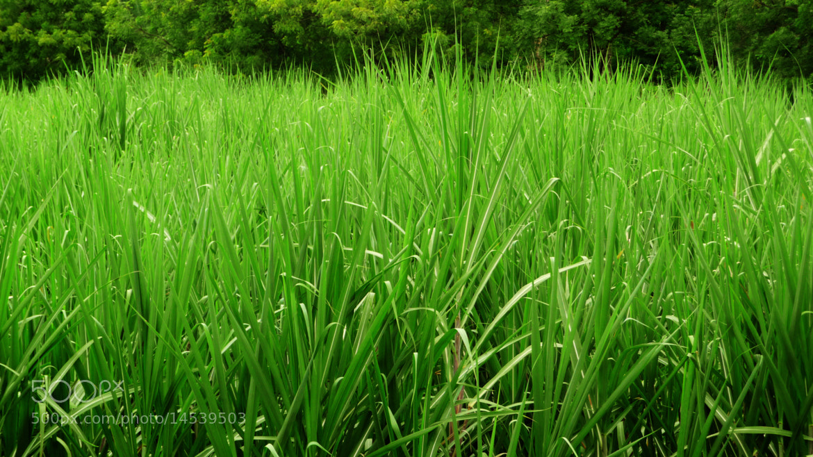 Photograph Simply green by Mohit Yadav on 500px