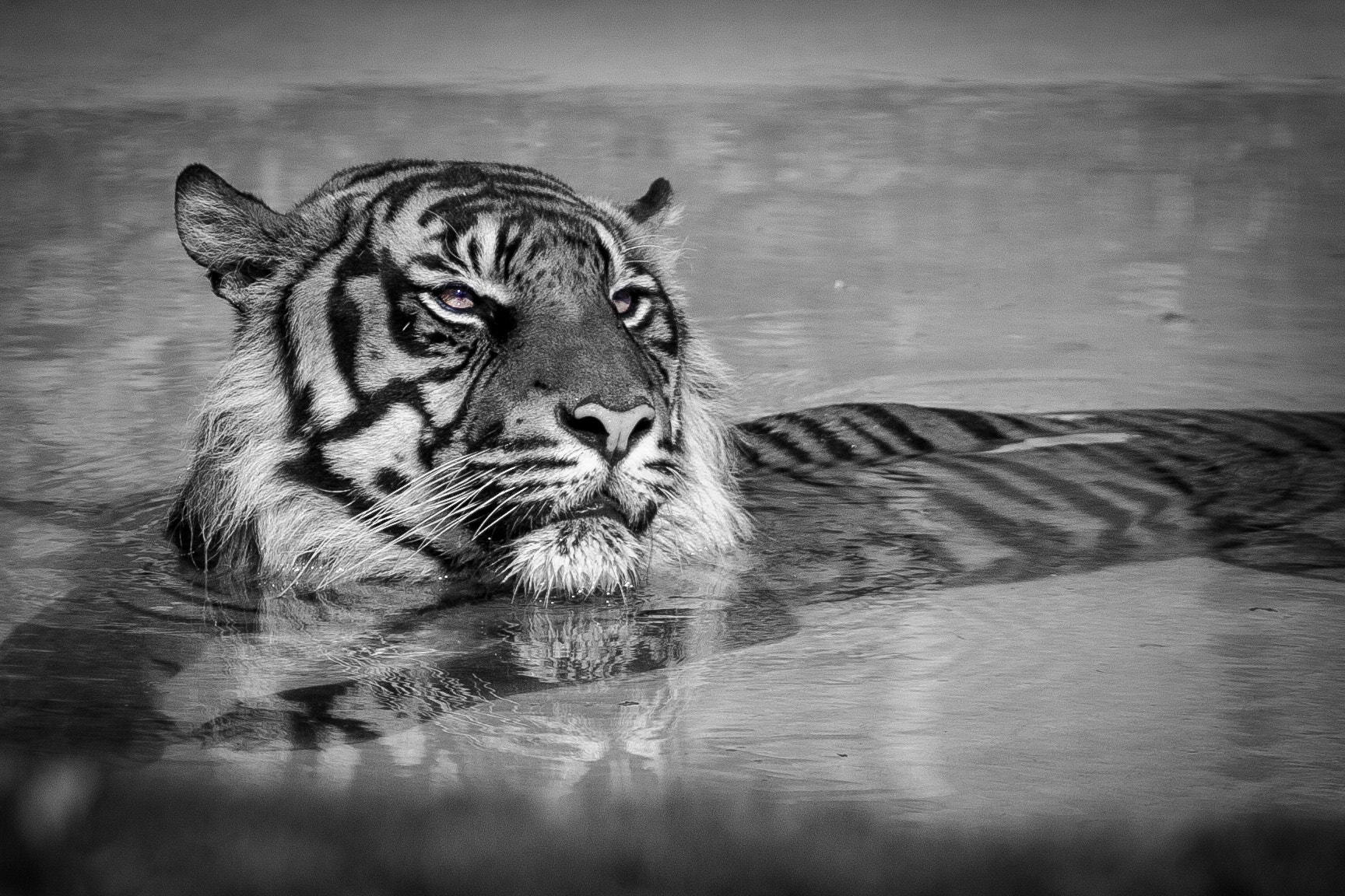 Photograph Lazy Tiger by Bjorn Harald Frang Hagfors on 500px