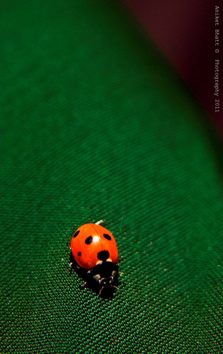 Photograph The Lady Bug Charm! by Aniket Bhatt on 500px
