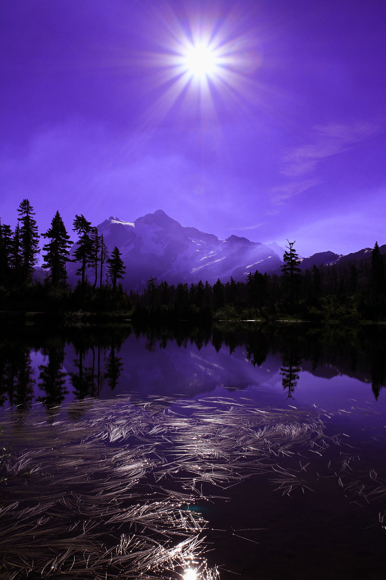 Photograph Lavender Star by hylobates on 500px