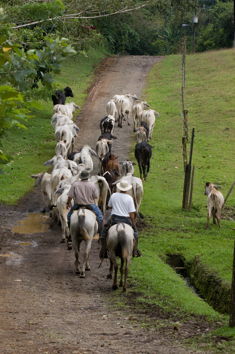 Photograph Costa Rican Guachos by Stephen Stephen on 500px