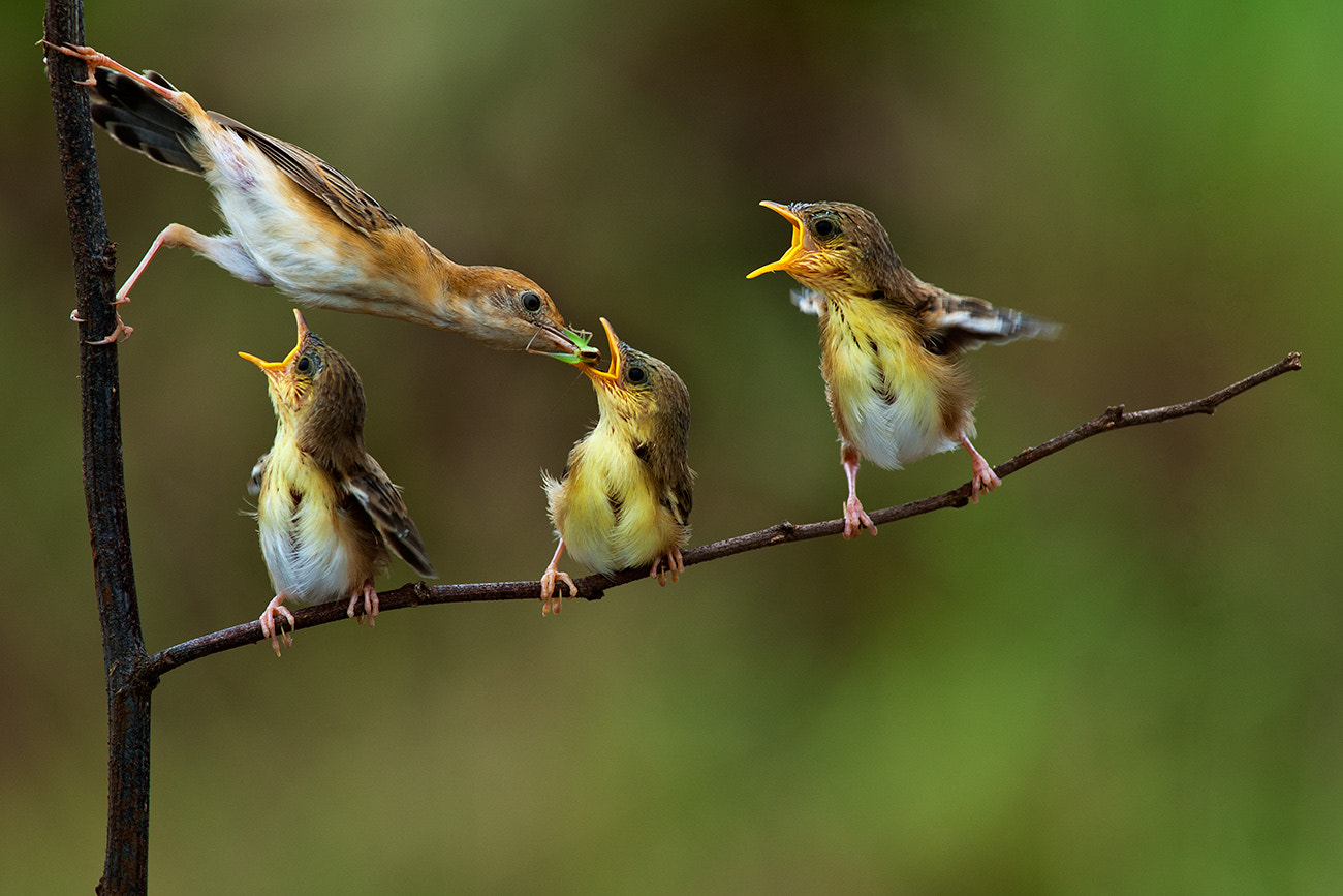 Photograph It's my turn by Cherly Jong on 500px