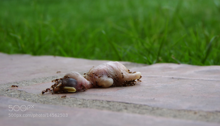 Photograph LILLIPUT by Matías Salemme on 500px