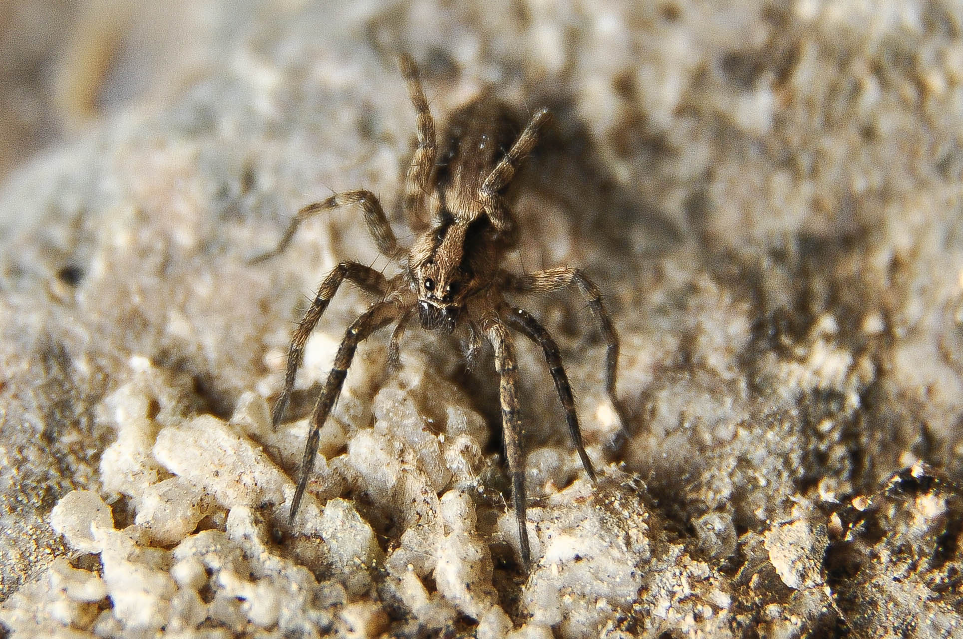 Photograph tiny spider  by bob perkins on 500px
