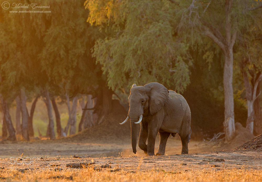 Photograph A stroll in the forest... by Morkel Erasmus on 500px