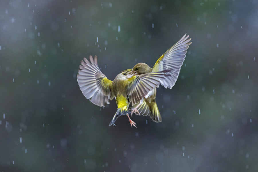 Dancing in the rain by Marco Redaelli on 500px.com