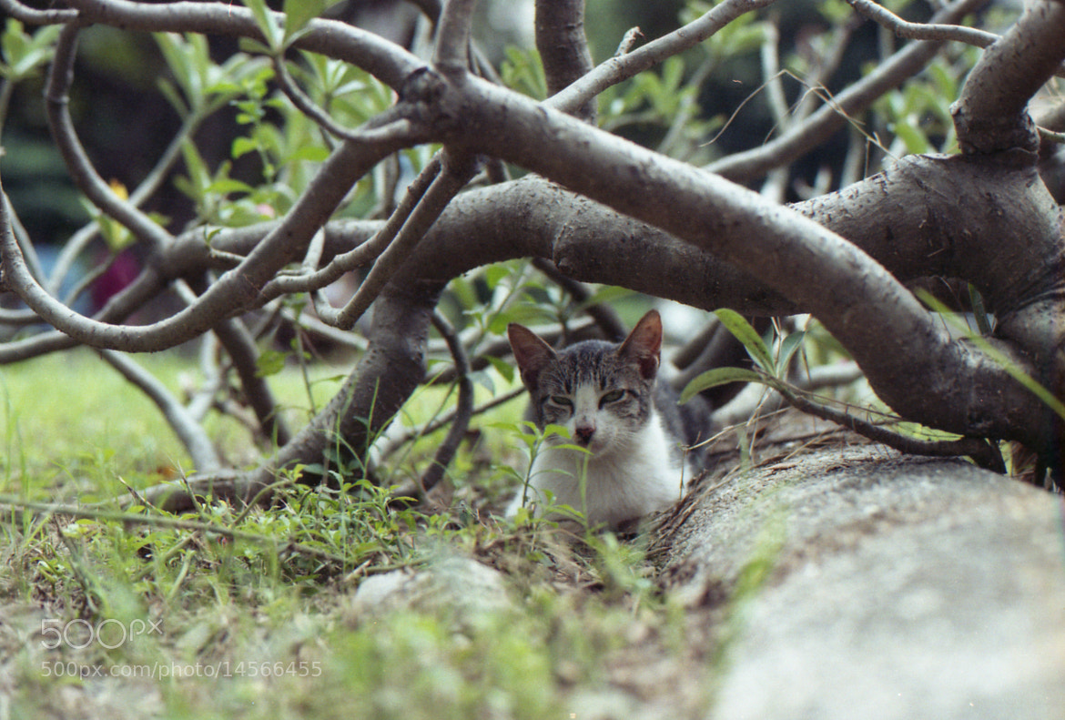 Photograph Pussy in the Bush by Rem Lansangan on 500px