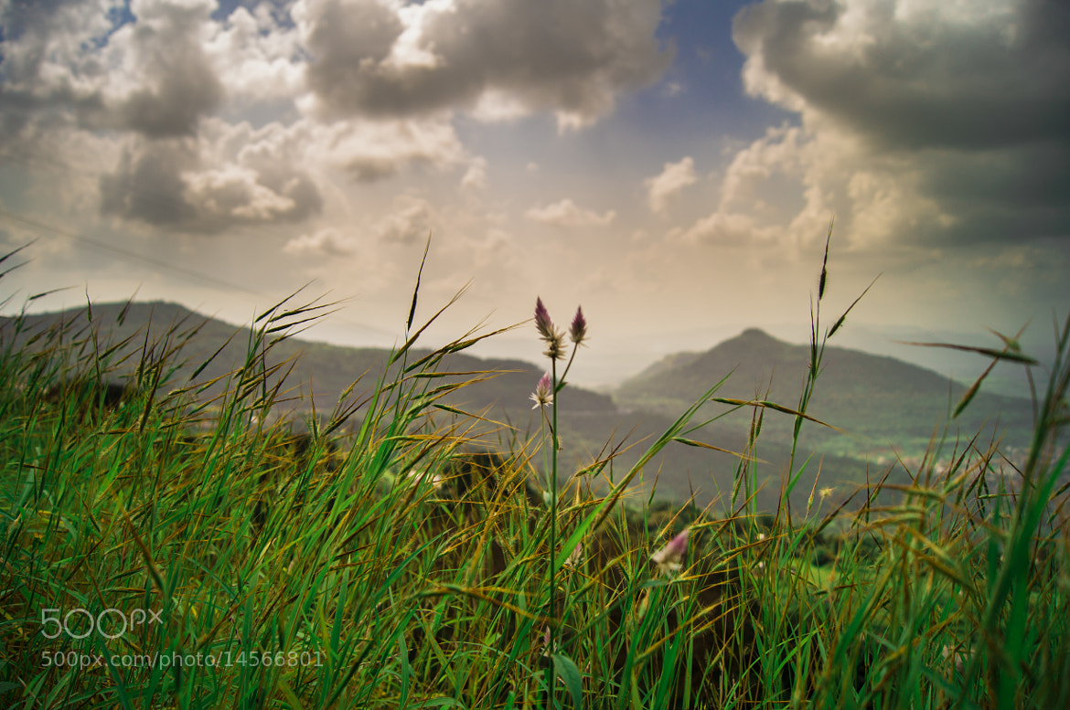 Photograph Sprig by Aniket Goswami on 500px