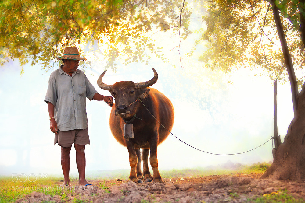 Photograph My Buffalo by Saravut Whanset on 500px