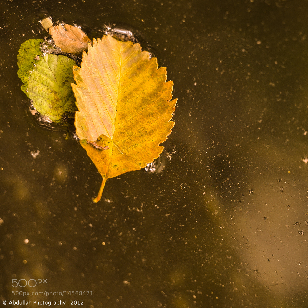 Photograph Fall by Abdullah Al-Dhamin on 500px