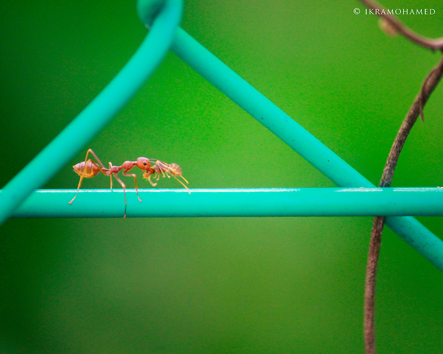 Photograph The Ant by Ahmad ikram Mohamed on 500px