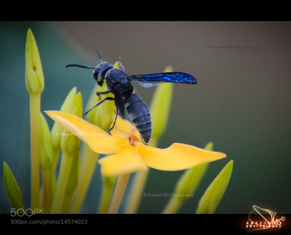 Photograph Untitled by aneeshms ms on 500px
