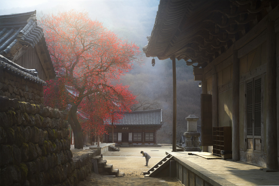 The Fragrance of a Thousand years by jae youn Ryu on 500px.com