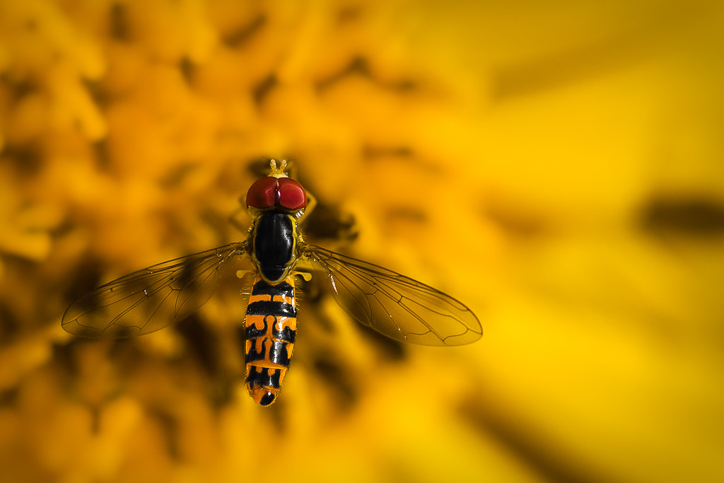 Photograph Rase-mottes by Mario Cliche on 500px