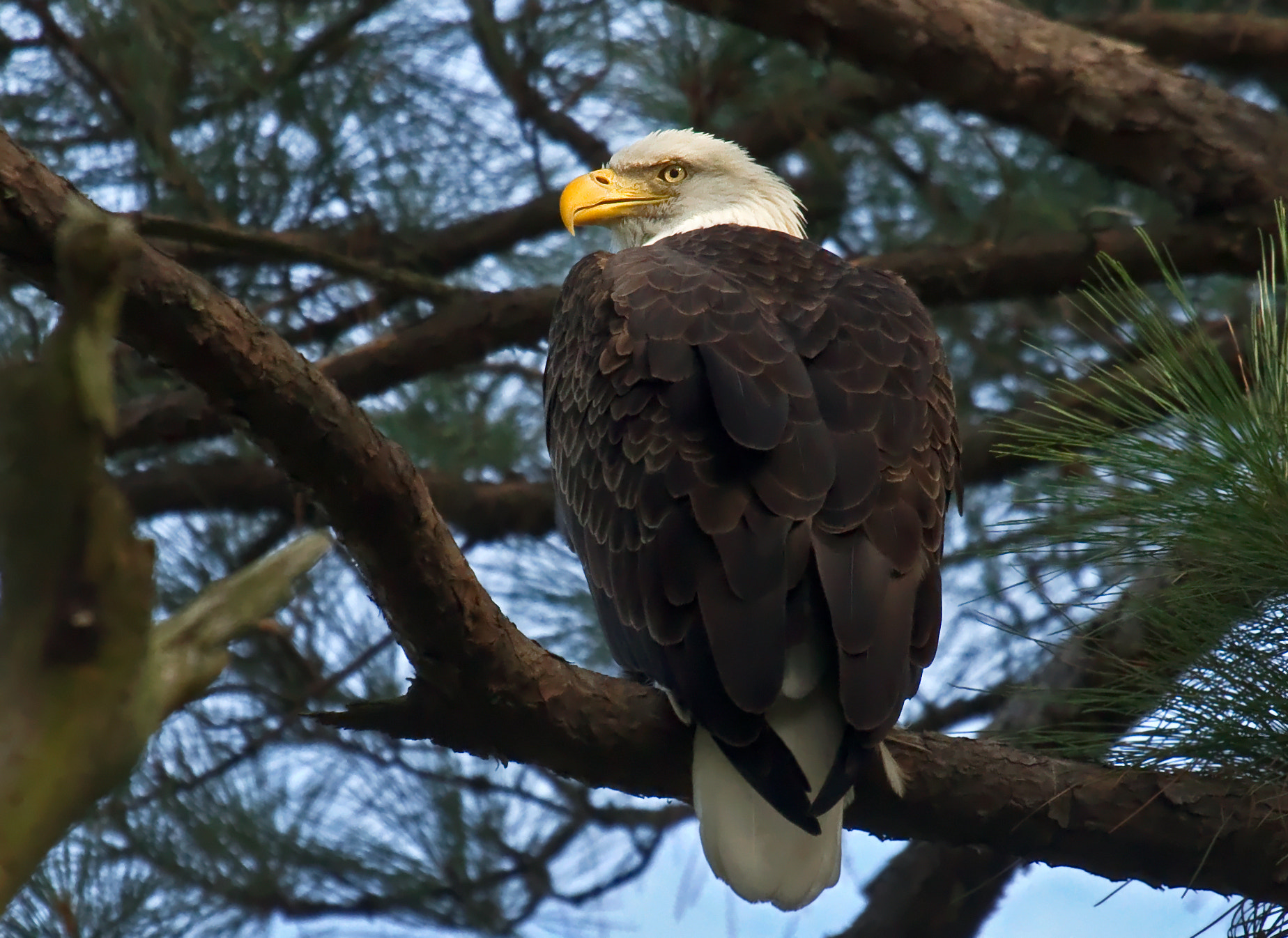 Photograph The Garden Eagle by Lorraine Hudgins on 500px