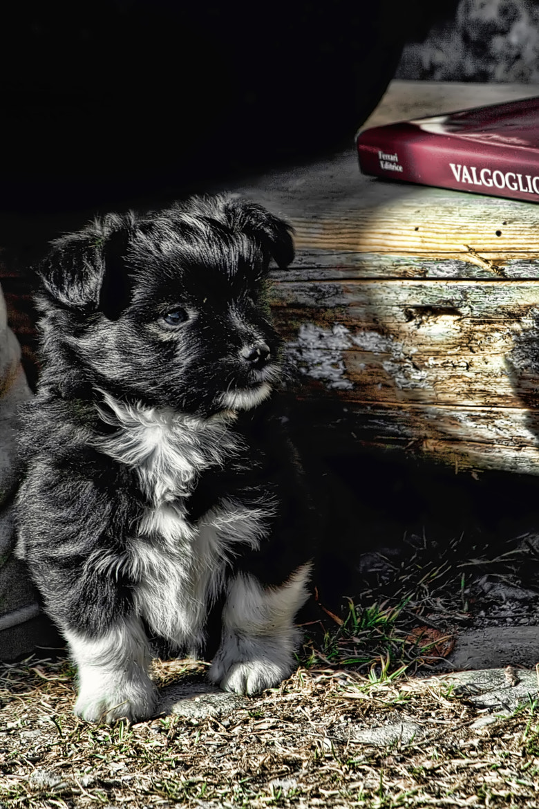 Photograph She puppy by Devid Strazzante on 500px