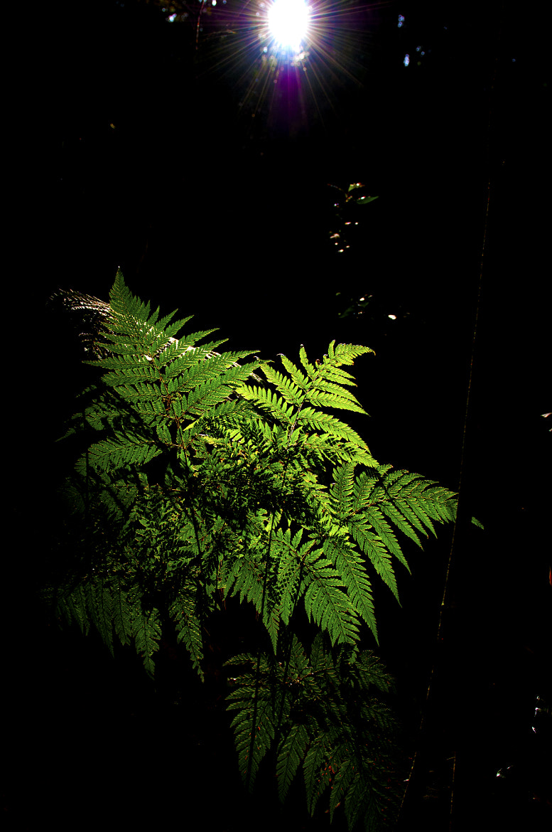 Photograph Fern by Michael M Kjær on 500px