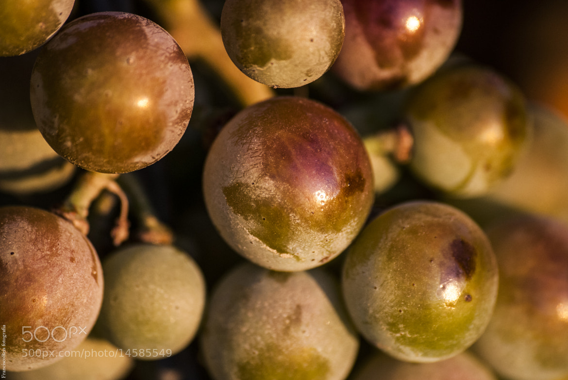 Photograph Sunset Grapes by Francisco Reis on 500px