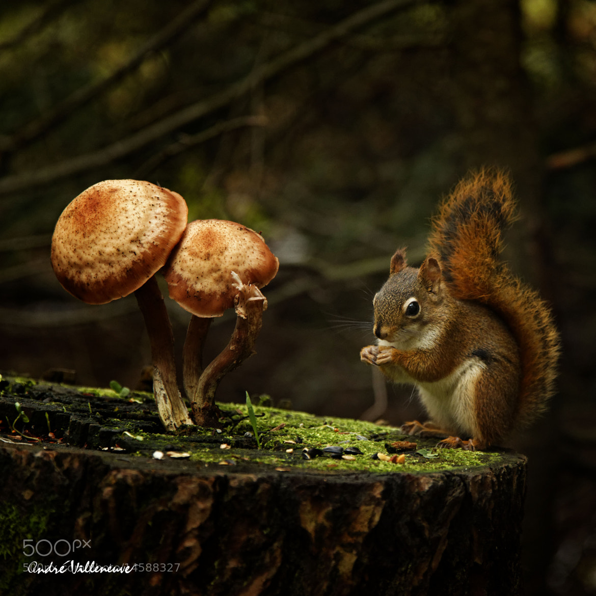 Photograph The rest room by Andre Villeneuve on 500px