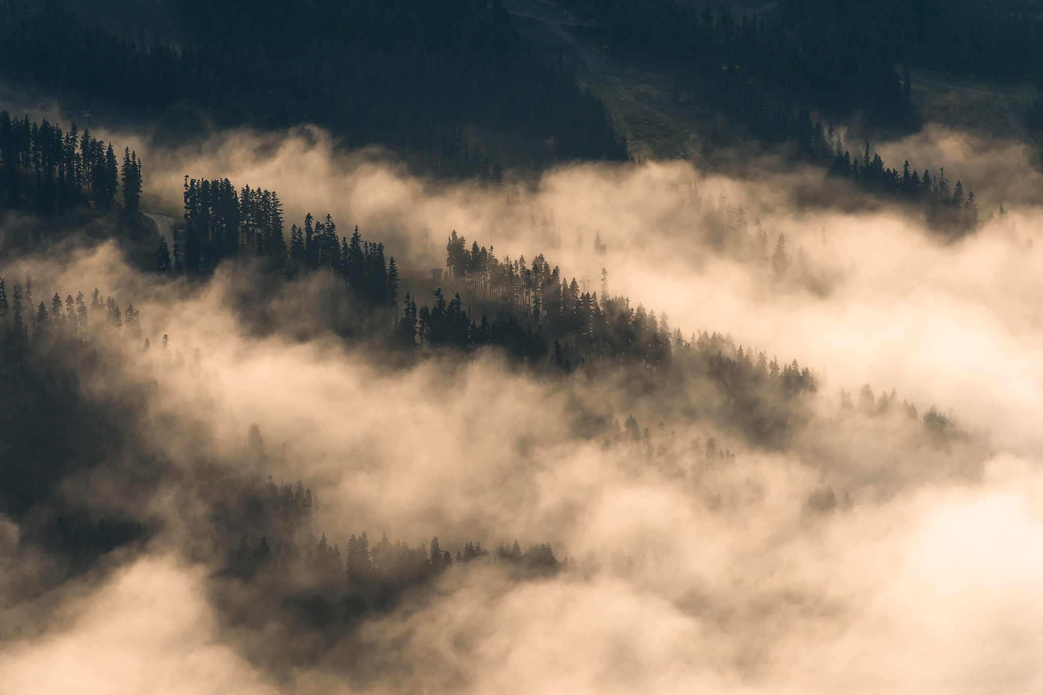 Photograph I thought of you when the mist cuddled the trees by Evgeny Tchebotarev on 500px