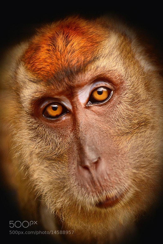 Photograph Sad Monkey by Wilfredo Lumagbas Jr. on 500px