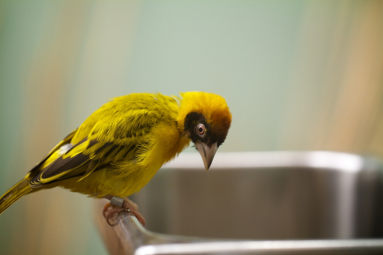 Photograph Bird on sink by Brian Gottleib on 500px