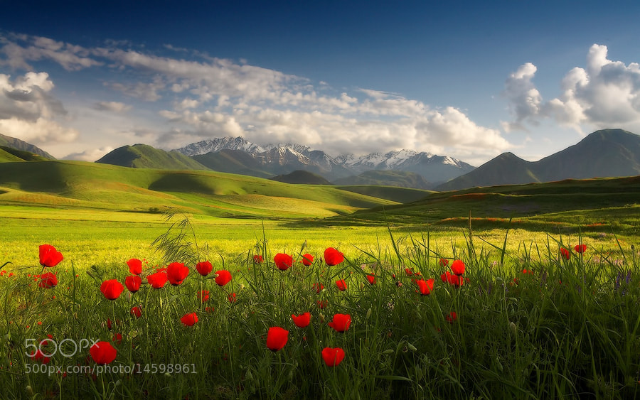 Photograph My beautiful Spring by Lazy Vlad on 500px