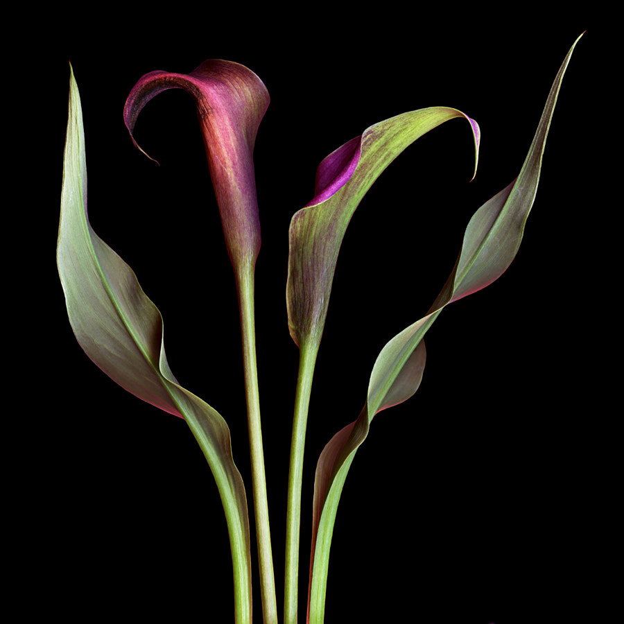 Photograph Exotica by Kate Scott on 500px