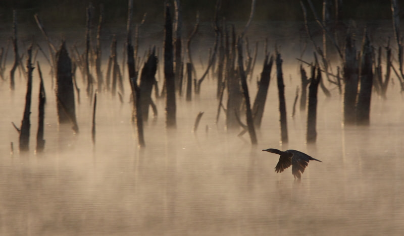 Photograph Morning mist by Delphine Varenne on 500px