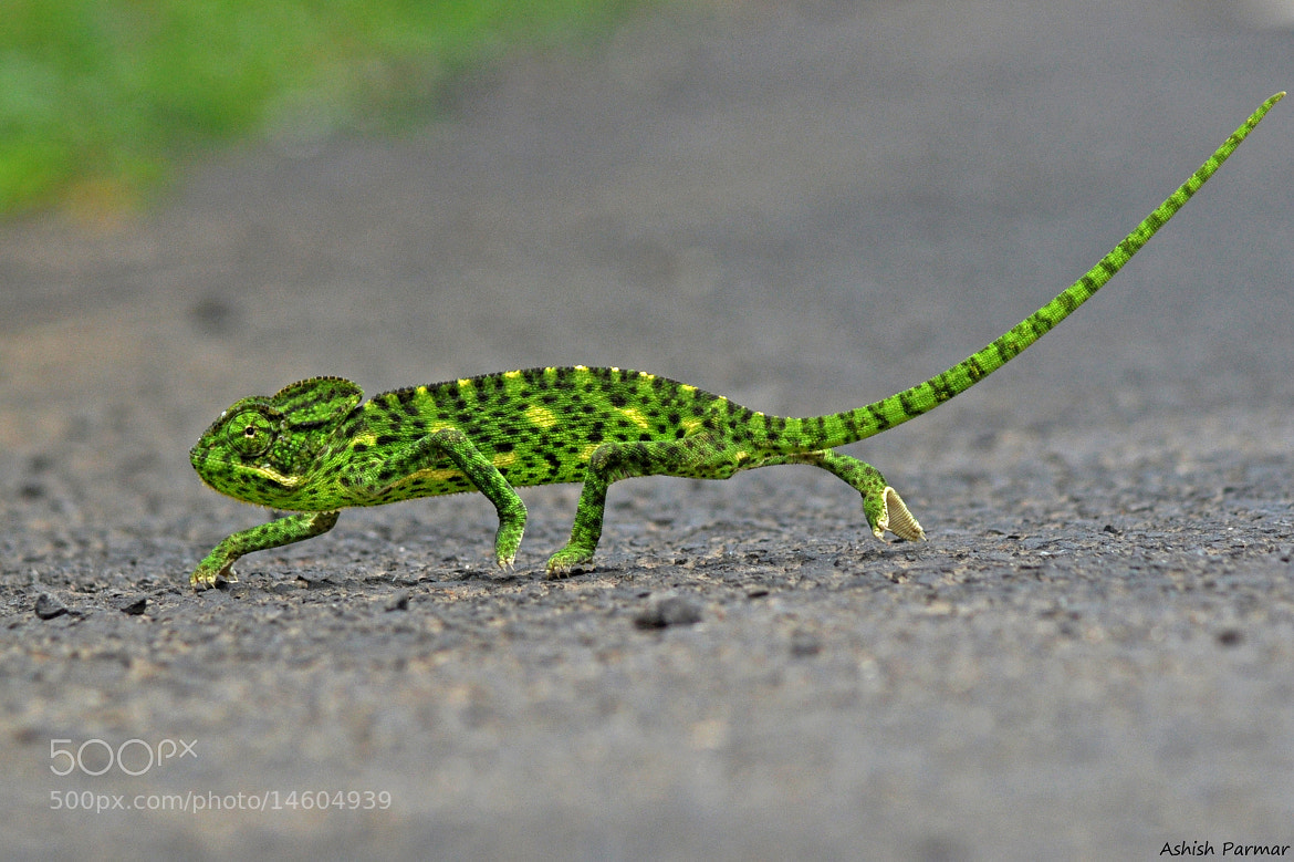 Photograph Ramp Walk by Ashish Parmar on 500px
