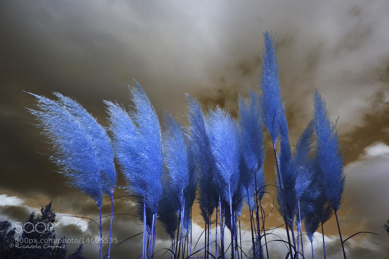 Photograph Pintando el cielo by Ricardo GoMєz on 500px