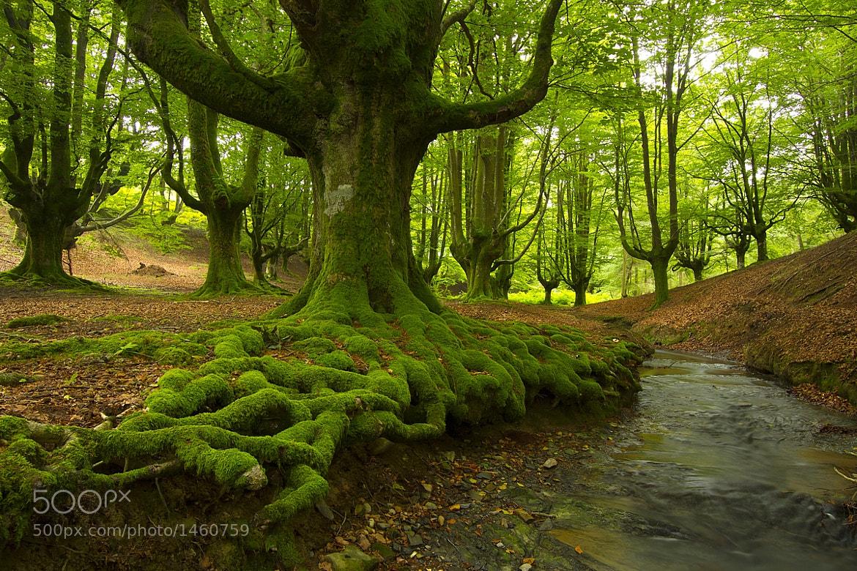 Photograph El bosque encantado by Gorka Barreras on 500px
