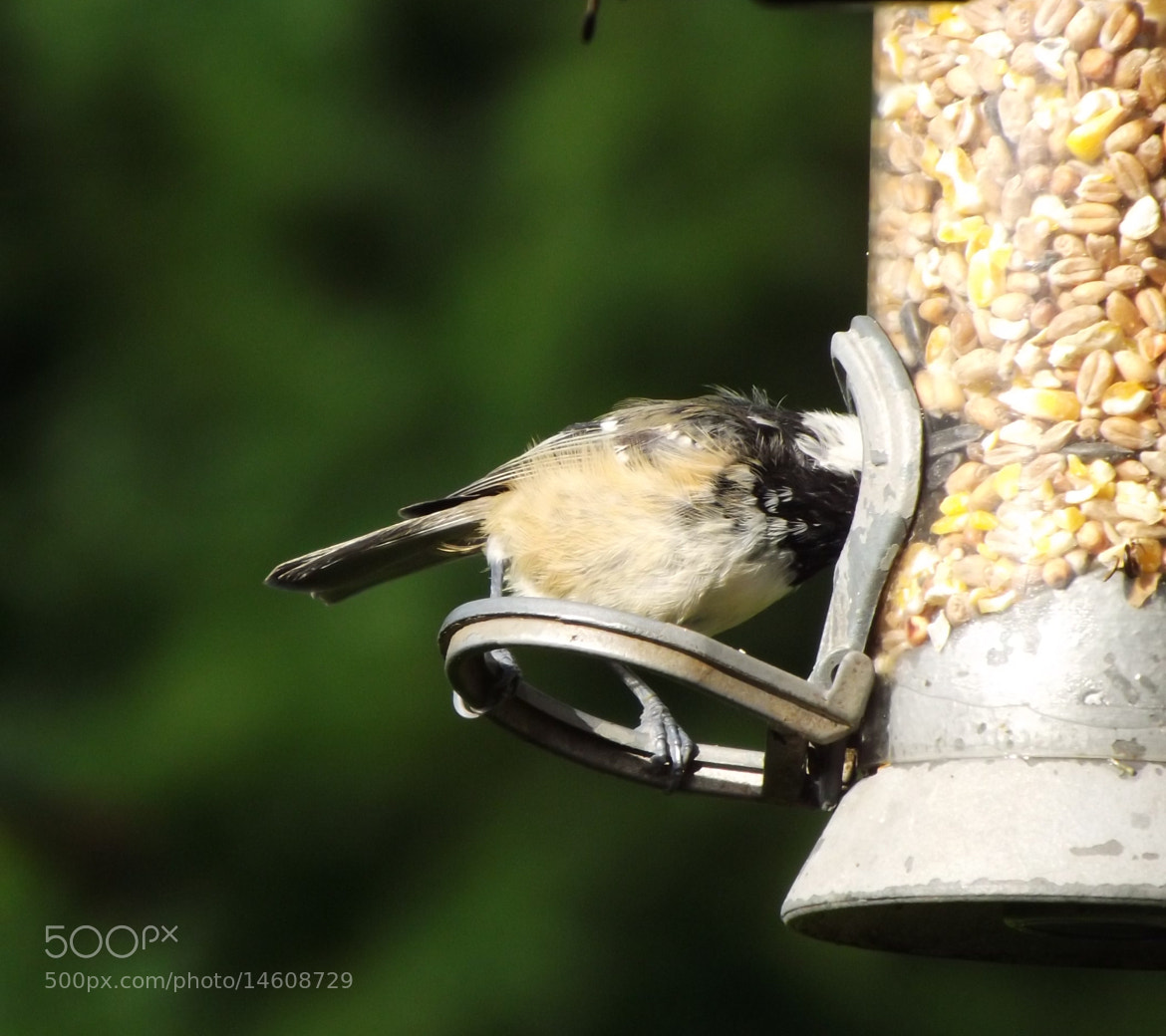 """Photograph Blue tit """"hello?"""" by Max Rigden on 500px"""