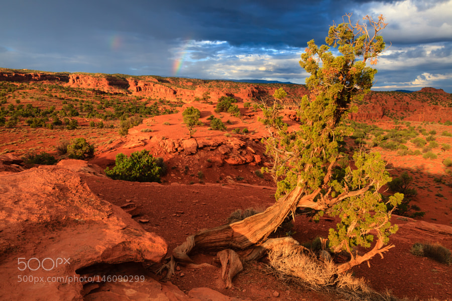 Capitol Reef National Park by pixontrips