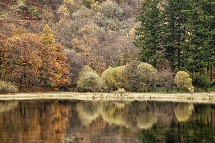 Yew Tree Tarn reflections
