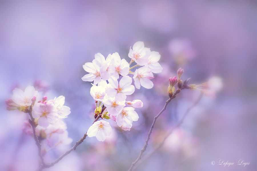 Smell Sweet Spring by Lafugue Logos on 500px.com