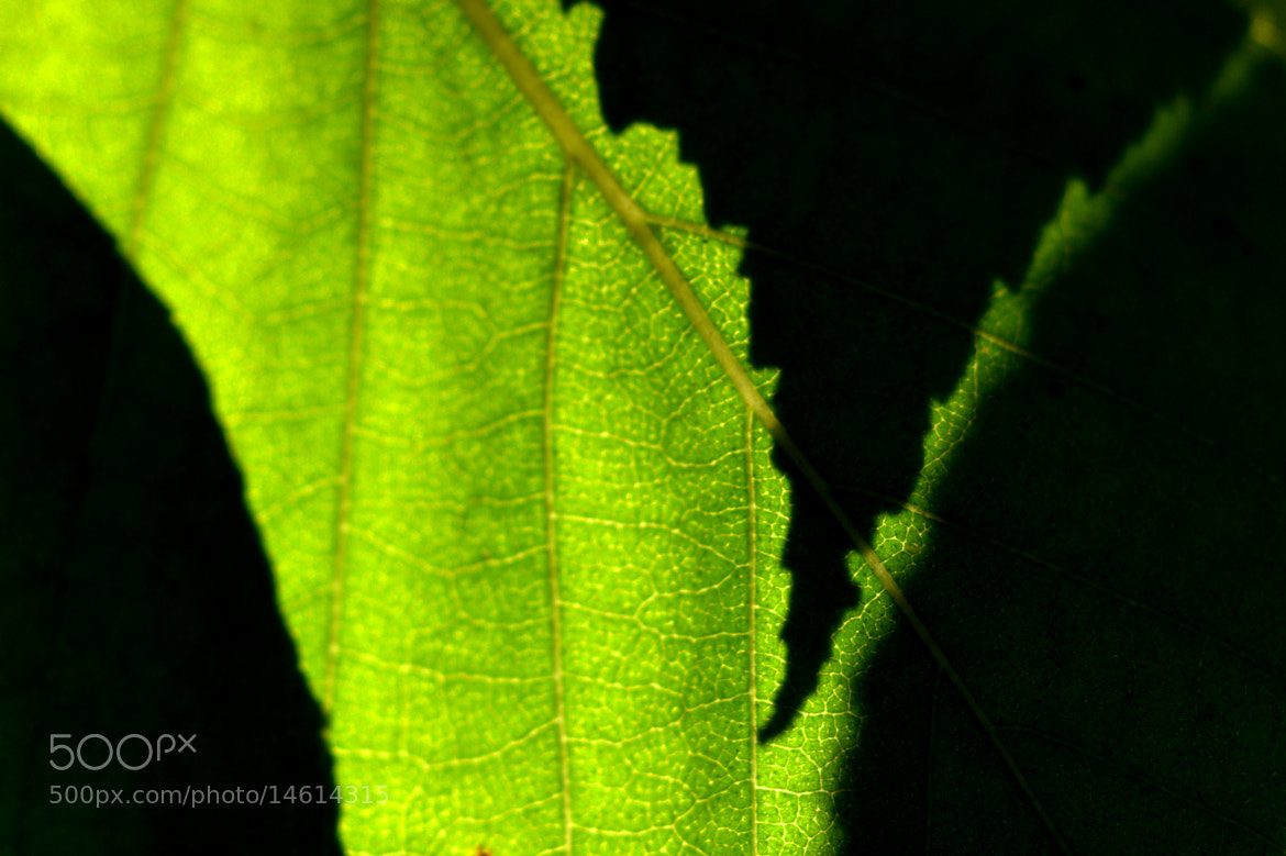 Photograph Leaf - Abstract by Matt Taggart on 500px