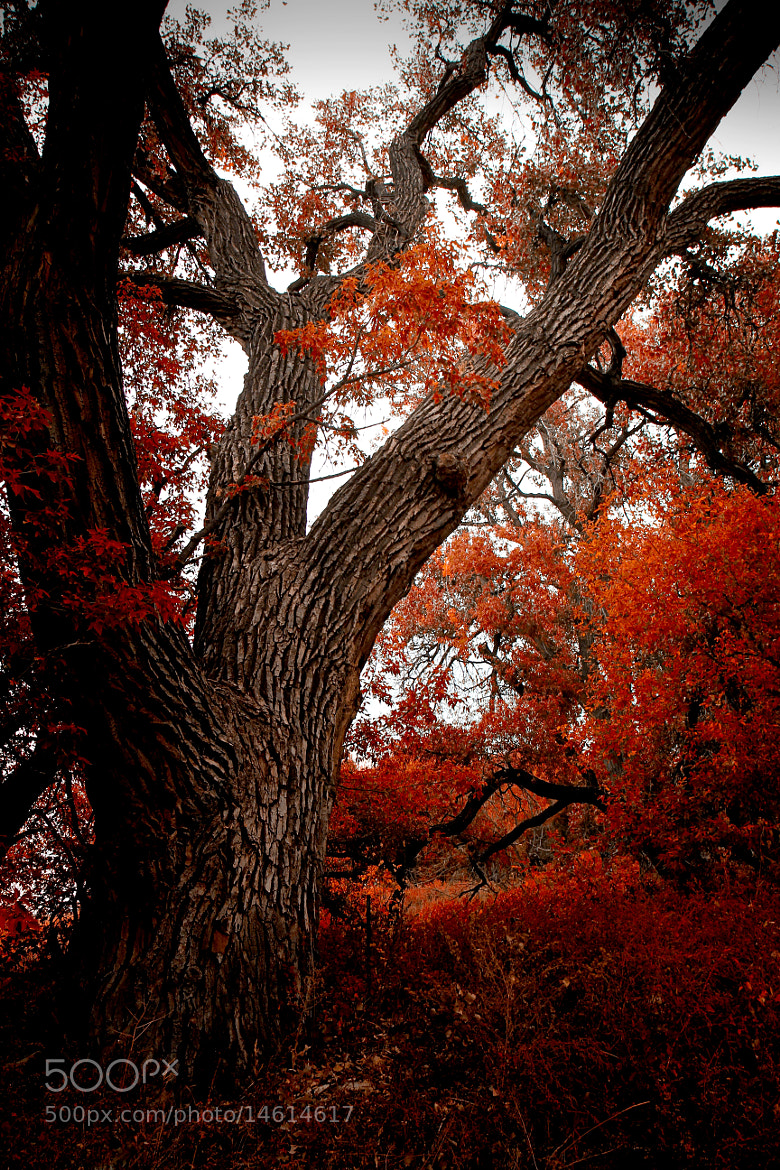 Photograph Red2 by Johnny Gomez on 500px